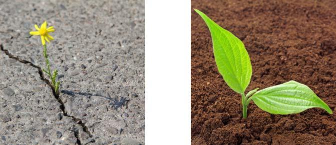 Eine Pflanze, die durch den Asphalt bricht und ein Keimling in der Erde